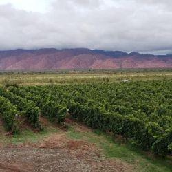 Bodega La Rioja.