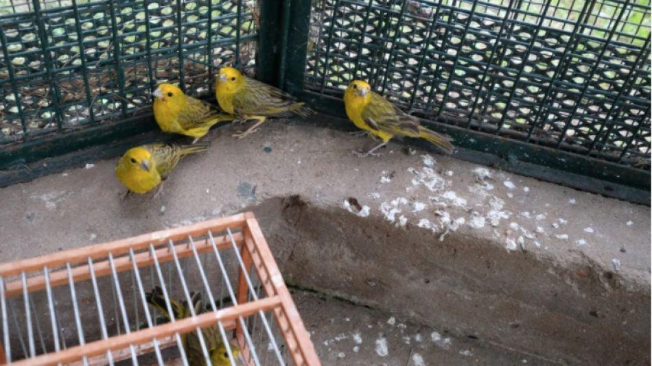 Decomiso de aves en forrajería de Villa Rosa, Pilar
