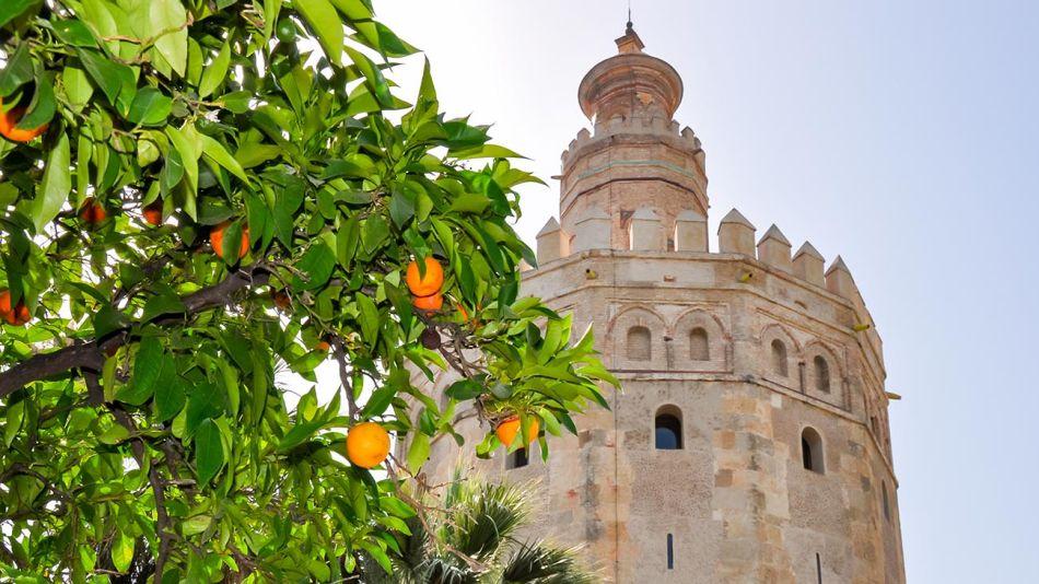 Sevilla árboles de naranja 20210323
