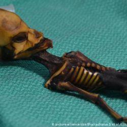 El esqueleto de Ata estaba escondido detrás de una iglesia en el desierto de Atacama, Chile.