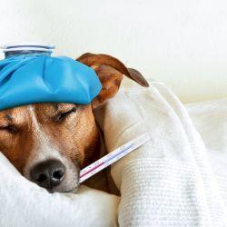 Una clara señal que indica que nuestra mascota está a punto de morir es la alteración de las constantes vitales.