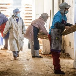 Esta foto muestra a trabajadores aventando hierbas medicinales tradicionales chinas en una fábrica en Bijie, en la provincia de Guizhou, suroeste de China.   Foto:STR / AFP