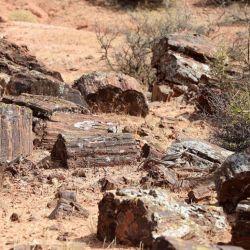es zona paleontológica excluyente y protegida debido a la presencia de decenas de árboles fosilizados