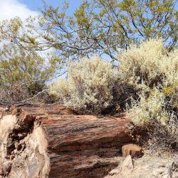 Se presentó el anteproyecto para declarar Patrimonio Cultural e Histórico de la provincia al mencionado bosque