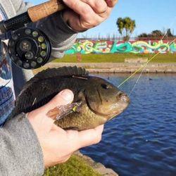 Por el lado de las chanchitas o chatas, son otra especie que no se pescan, diríamos que se cazan con los ojos.