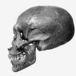 Los científicos se basaron en datos de exámenes físicos previos del cráneo y radiografías del esqueleto.