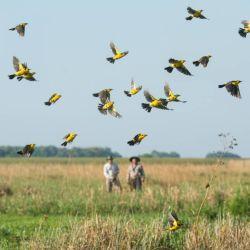 Iberá es el principal atractivo natural de la provincia de Corrientes, pero no el único.