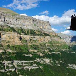 La mielinopatía vacuolar aviar es la culpable de la muerte de las águilas calvas.
