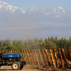 A man works on a tractor at the vineyards of the Catena Zapata winery in Agrelo, Luján de Cuyo.