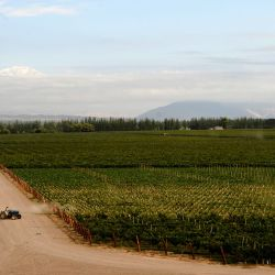 View of the vineyards at the Catena Zapata winery in Agrelo, Luján de Cuyo.