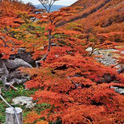El sencillo trekking hasta la mitad del cerro Martial parece rodeado de jardines zen.  Es una caminata ideal  para quienes gusten  de la fotografía.