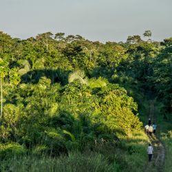 Los actuales bosques tropicales son el resultado de la extinción masiva que tuvo lugar a finales del período Cretácico.