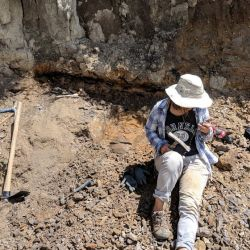 instituciones liderado por Mónica Carvalho, miembro del Smithsonian Tropical Research Institute, Panamá, lideró la investigación.
