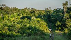 0406_bosques