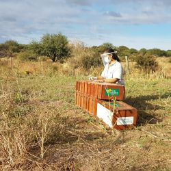 Fueron rehabilitados en el Centro de Recuperación de Especies de la Fundación Temaikén y en el Ecoparque de la Ciudad Autónoma de Buenos Aires