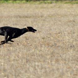 El proyecto busca prohibir terminantemente el uso de perros para todas las actividades vinculadas a la caza.