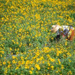 Esta foto muestra a los empleados trabajando en un campo de flores en la ciudad de Qionghai, provincia de Hainan en el sur de China.   Foto:STR / AFP