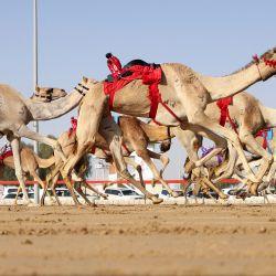 Camellos equipados con robots jinetes compiten en la aldea patrimonial al-Marmoom de Dubai en los Emiratos Árabes Unidos. | Foto:Karim Sahib / AFP