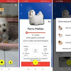 La aplicación permite identificar hasta 117 diferentes razas de perros.