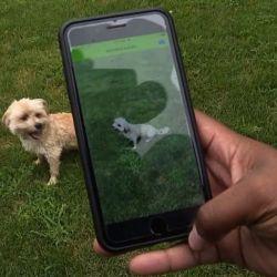 La aplicación permite identificar hasta 117 diferentes razas de perros con solo fotografiarlos.