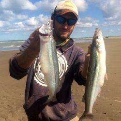 Los mejores pesqueros para esta especie son las zonas de bancos.