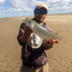 La modalidad de pesca, para esta especie como es el pejerrey panzón, es de fondo realizando lances, entre 15 a 40 metros de la costa.