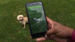 0413_aplicación perros