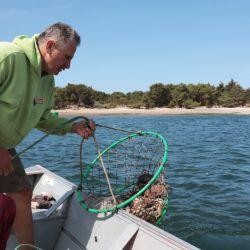 """El almuerzo más fresco: la pesca de cangrejos, llamada """"crabbing"""". Foto: Verena Wolff/dpa"""