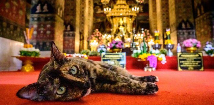 Un gato yace en la alfombra dentro de un templo budista mientras Tailandia celebra su Año Nuevo budista, conocido localmente como Songkran, cuando las autoridades tailandesas impusieron restricciones de seguridad pública en el festival debido al resurgimiento del coronavirus Covid-19.