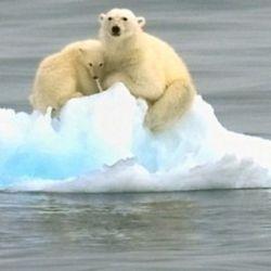 las plataformas de hielo son una especie de amortiguadores que impiden que los glaciares terrestres fluyan libremente hacia el océano