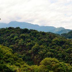 Las parcelas sirven para investigar la dinámica de los bosques a largo plazo
