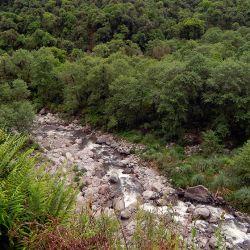 Los investigadores analizaron una base de datos de 119 parcelas permanentes establecidas en los Andes tropicales y subtropicales