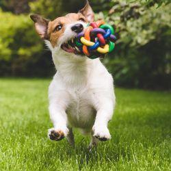Cada vez que incorpora una aprendizaje lo mejor es premiarlo con un snack o juguete favorito.