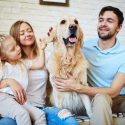 Sumar a un perro a nuestra familia requiere de varios cuidados especiales.
