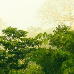 La fecha también busca crear conciencia sobre diversos problemas ambientales como la superpoblación y la contaminación.