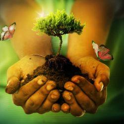 Los ecosistemas sustentan todas las formas de vida de la Tierra.