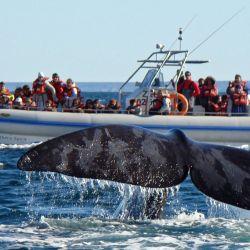 Las excursiones turísticas de avistaje embarcado se realizan, entre mediados de junio y principios de diciembre