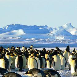 Los pingüinos son uno de los animales más queridos por los niños y por muchos grandes también.