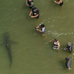 Esta imagen muestra una vista aérea de personas que usan sus teléfonos y cámaras para filmar a un tiburón nadando en las aguas poco profundas del mar Mediterráneo frente a la ciudad costera israelí de Hadera al norte de Tel Aviv. | Foto:Jack Guez / AFP