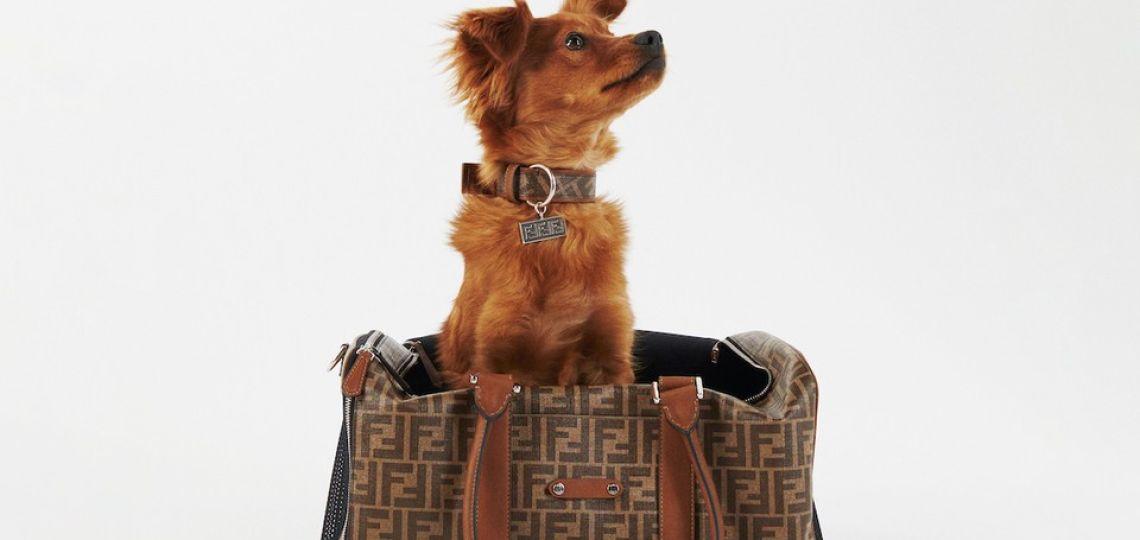 Fendi lanza esta lujosa línea para mascotas