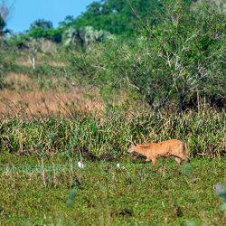 Se ha comprobado la gran susceptibilidad de diferentes especies animales, tantos domésticos como silvestres a ser infectadas con el SARS-CoV-2.