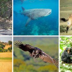El documento se basa en ver a la salud humana, animal y del entorno como un todo, y de forma transdisciplinaria.