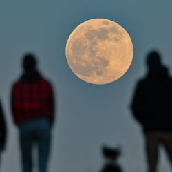 La gente se para en una colina y observa la luna naciente. | Foto:Patrick Pleul / dpa-Zentralbild / DPA