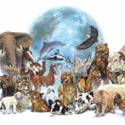 La fecha se conmemora en memoria del abogado cordobés Ignacio Lucas Albarracín, pionero en la lucha por los derechos de los animales.