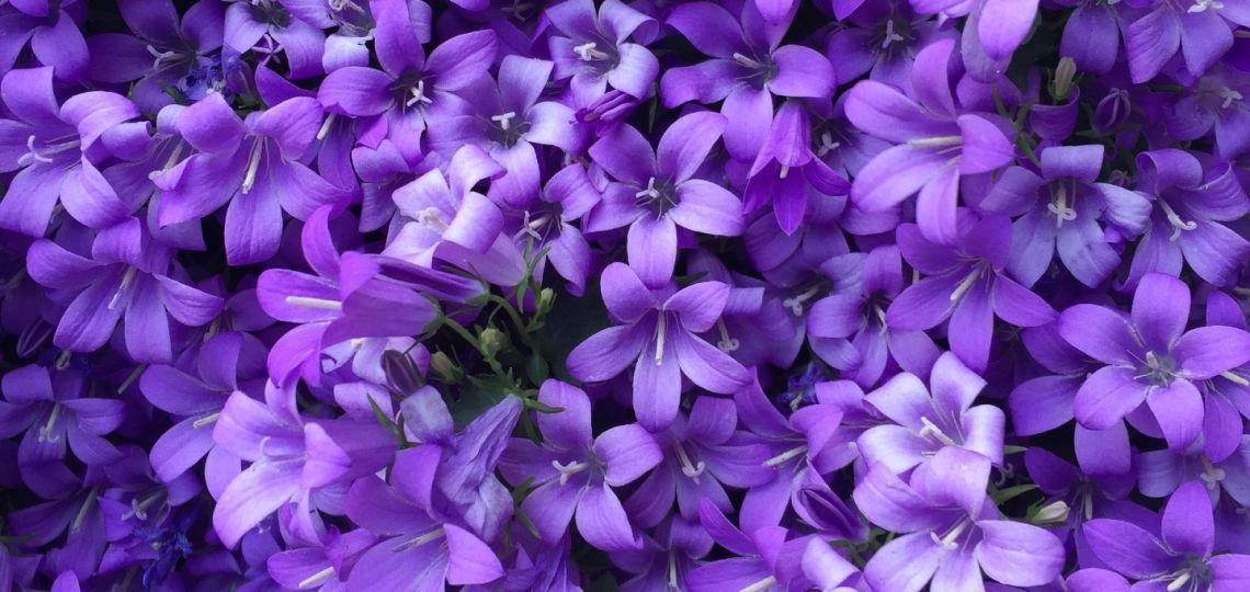"""Qué es y qué significa el """"sello púrpura"""" para agencias de publicidad"""