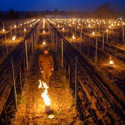 Till Neumeister, gerente de viticultura, enciende un fuego entre las vides de un viñedo. Los viticultores protegen las viñas de las heladas tardías con pequeños fuegos controlados en los viñedos.   Foto:Robert Michael / dpa-Zentralbild / DPA