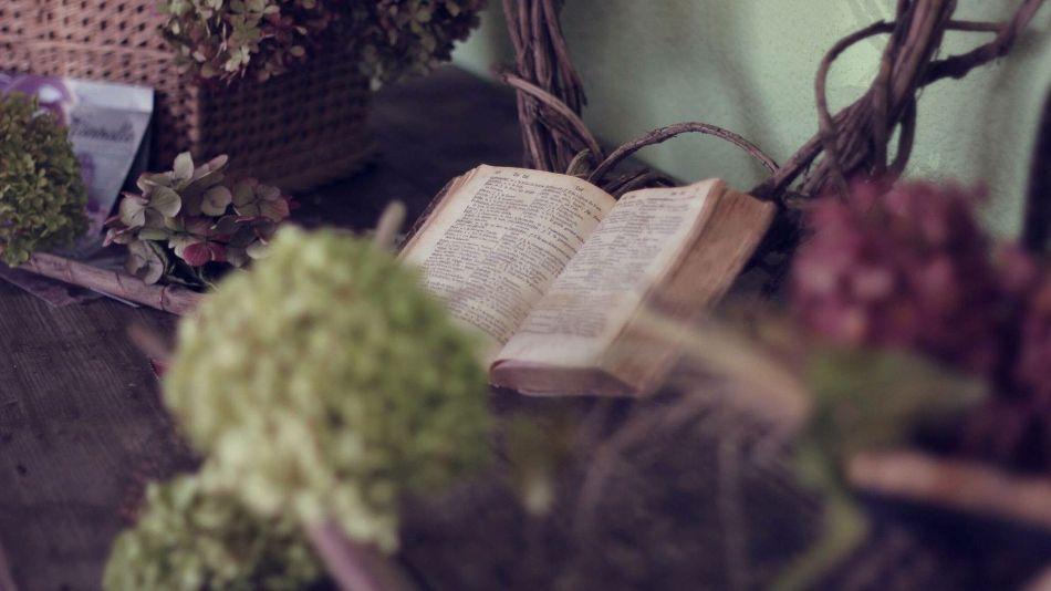 lectura-canasta-flores-Free-Photos-en-Pixabay-(11)