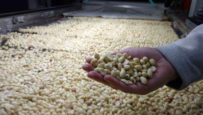 MERCADO. Argentina es el primer exportador mundial de maní elaborado y de aceite de maní.