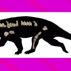 El Bharitalasuchus se encuentra cercanamente emparentado a especies de Rusia y de China