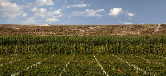 Grandes vinos de la Patagonia
